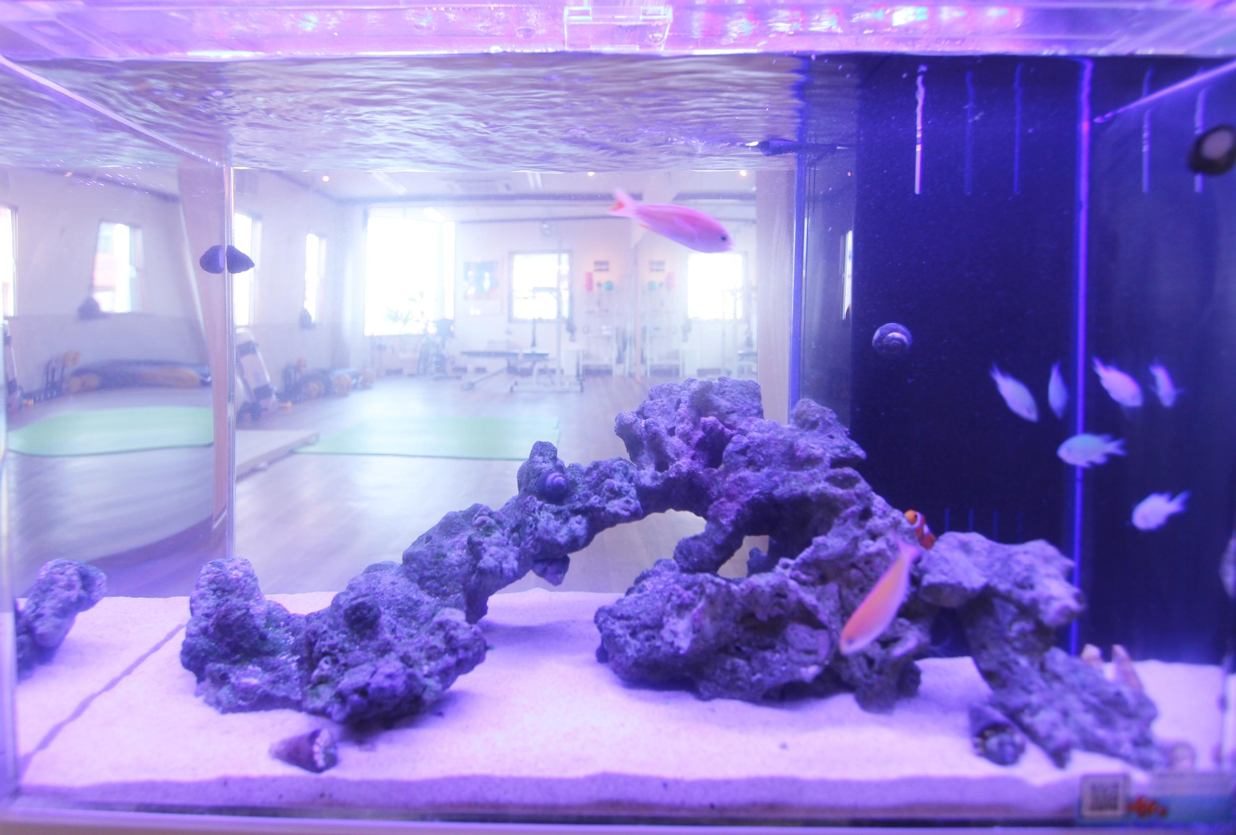 スポーツジム 60cm海水魚水槽 アップ画像