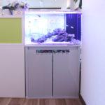 戸田市 スポーツジムに60cm海水魚水槽を設置水槽写真