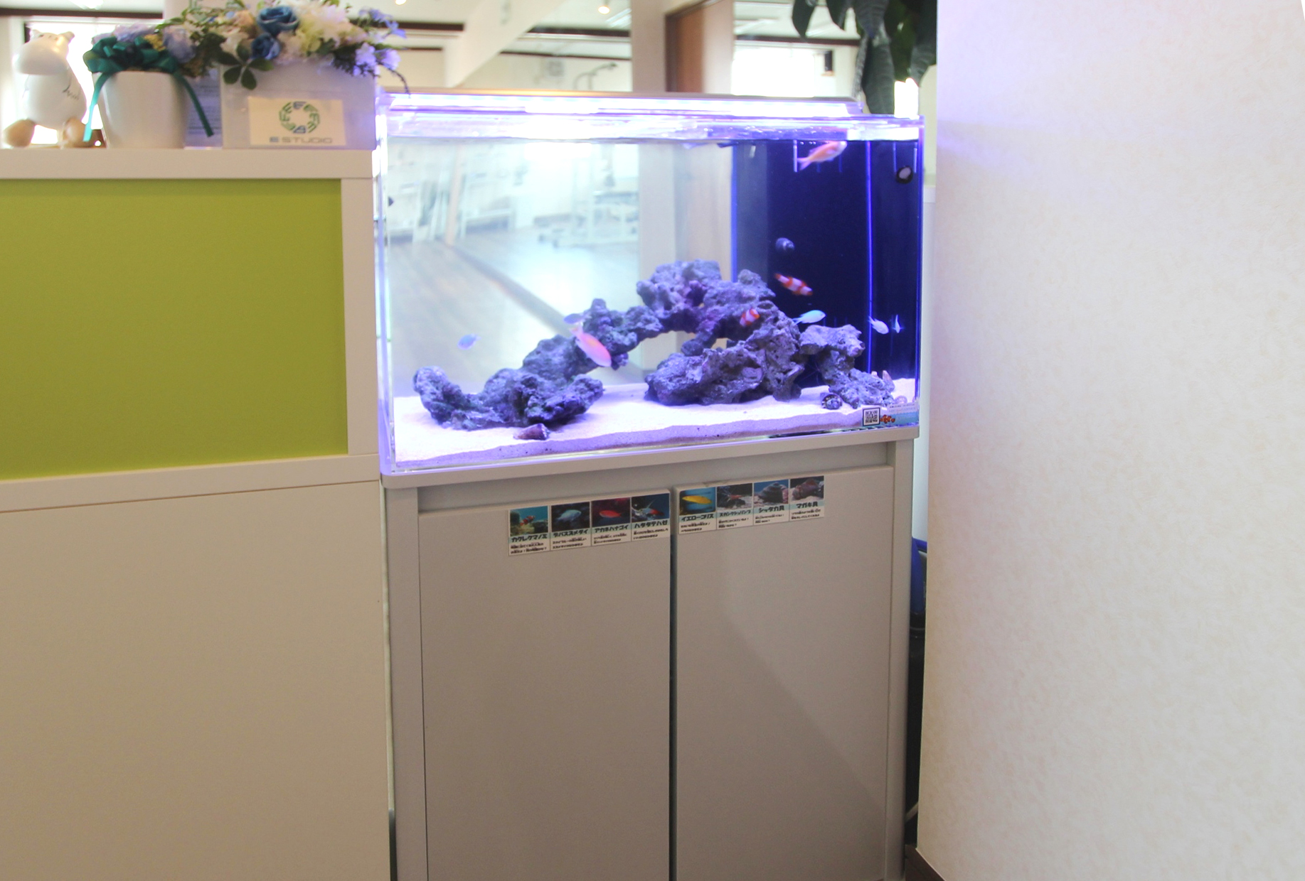 スポーツジム 60cm海水魚水槽 斜め画像