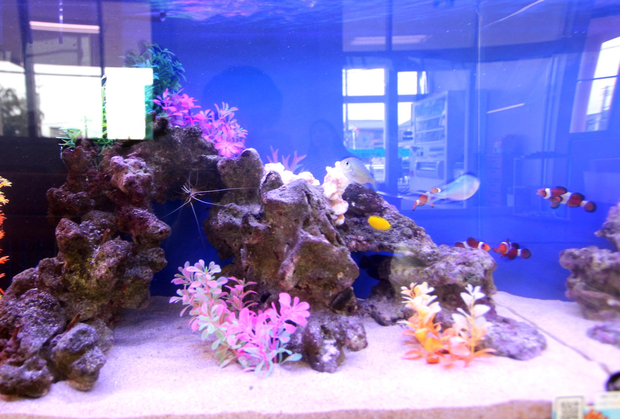 整形外科 60cm海水魚水槽 アップ画像