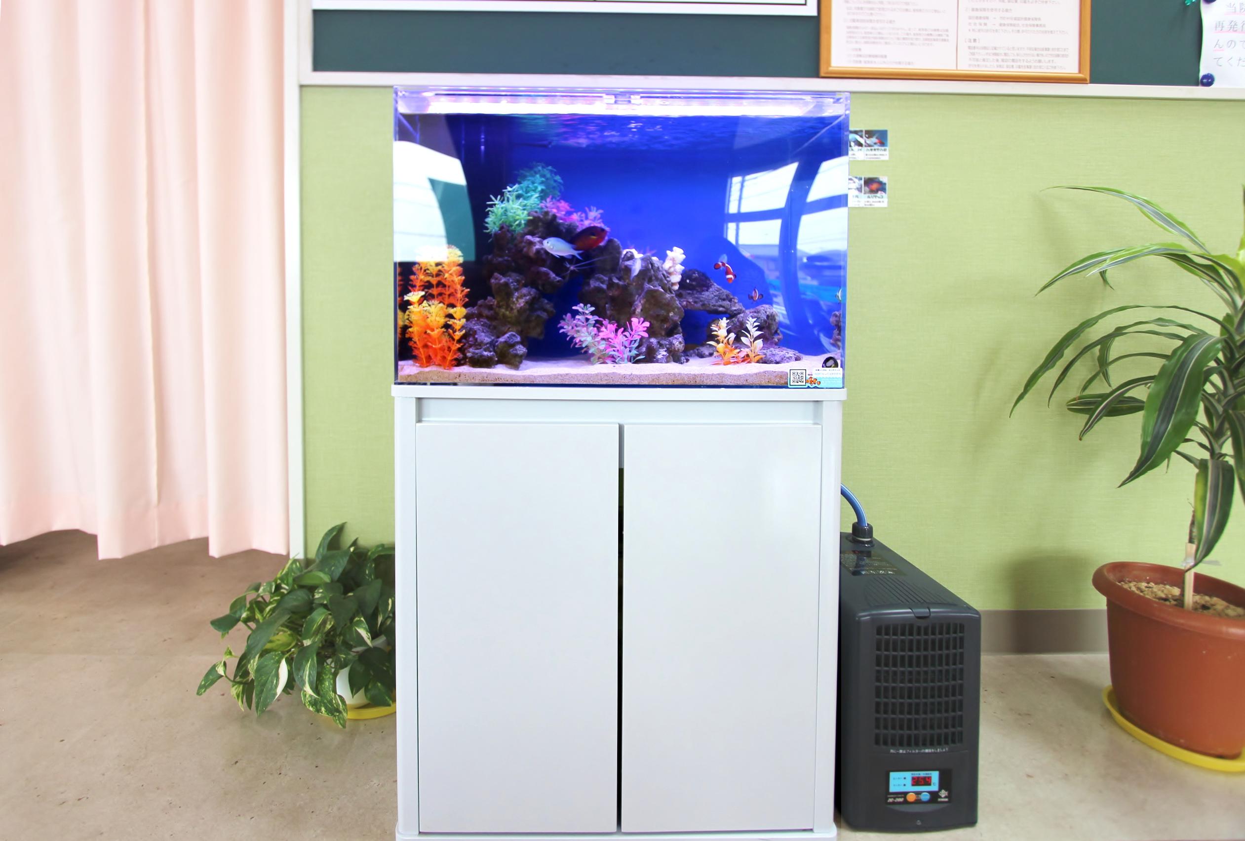 整形外科 60cm海水魚水槽 正面画像