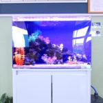 草加市 整形外科に60cm海水魚水槽を設置