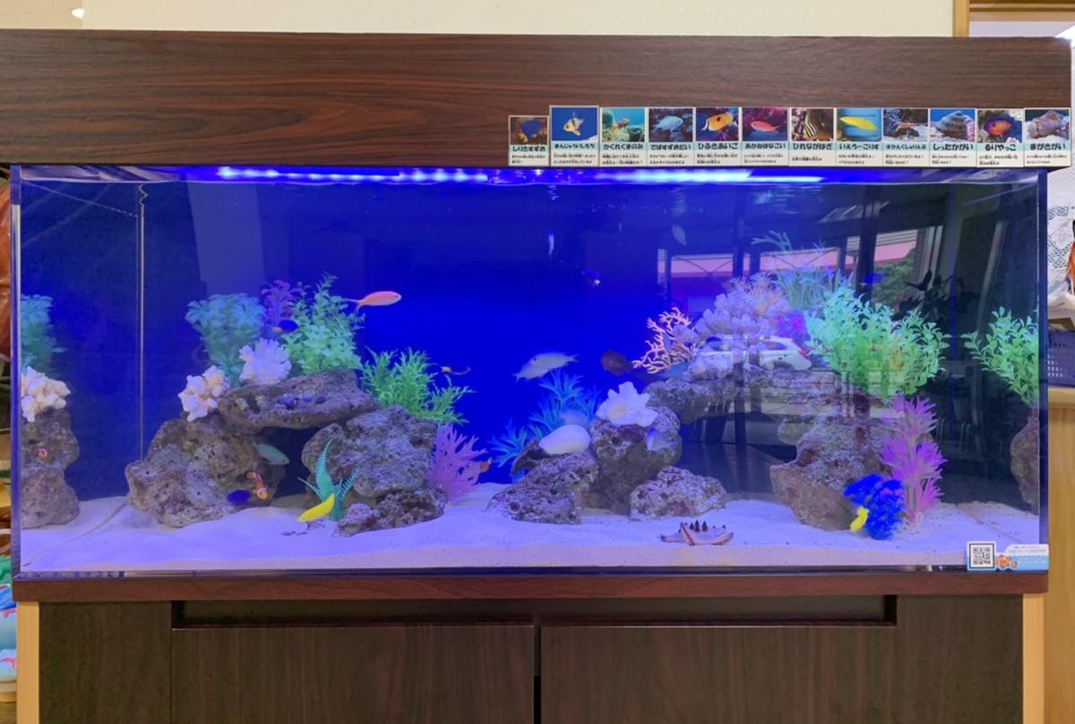 幼稚園 120cm海水魚水槽 水槽正面画像