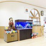さいたま市 幼稚園に120cm海水魚水槽を設置水槽写真