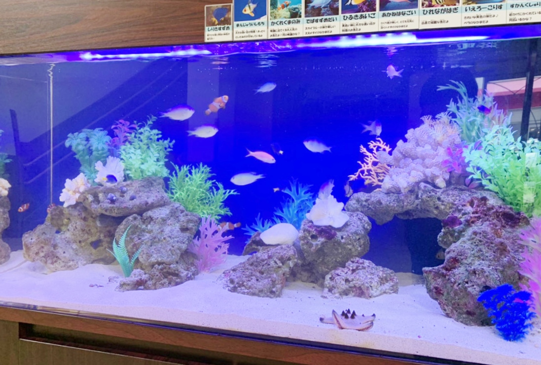 幼稚園 120cm海水魚水槽 水槽アップ面画像
