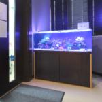 さいたま市 オフィスに120cm海水魚水槽を設置水槽写真
