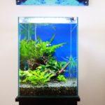 ふじみ野市 個人宅に30cm淡水魚水槽水槽写真